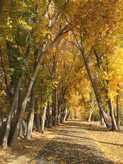 IMG_2764 (August Benjamin) Tags: provorivertrail provocanyonpkwy provoriver provocanyon provo orem utah mountains fall fallcolors trees leaves autumn jogging southfork vivianpark