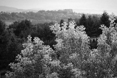 Białe liście / White leaves (Rrrodrigo) Tags: pushed ei3200 ilfordhp5 pentaxmesuper vivitarmacro10035 film blackandwhite white leaves dark forest