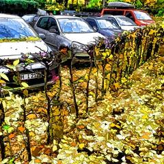 autumn (j.p.yef) Tags: peterfey jpyef yef seasons autumn cars leaves digitalart photomanipulation iphone square germany hamburg herbst