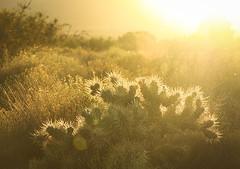 Love Flowers Best (blueverbena) Tags: lasvegascorncreekafternoon cactus desert