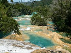Agua Azul à 60 km de Palenque/ Chiapas/ México (Claudette St-Arneault) Tags: argentine mexique pays