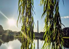 good morning! (ekelly80) Tags: dc washingtondc summer august2018 nationalmall constitutiongardens pond light sun sunrise morning glow framed tree green washingtonmonument reflection bright