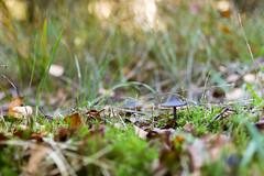 Waldboden (Sa Scha LC) Tags: wald waldboden waldspaziergang canon canon700d badwaldsee badenwürttemberg oberschwaben grün pilz tamron tamronsp35 35mm ried steinacherried