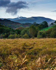 Flood Meadow (Andy Poole Images) Tags: autumn autumnal fern trees