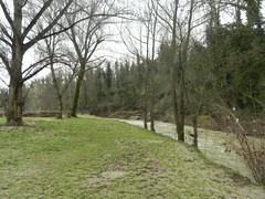 DSCN9940 (Gianluigi Roda / Photographer) Tags: springtime april 2013 creeks stream flood savena