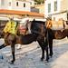 Donkeys on Hydra island Greece