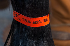 horse tag (Calovi) Tags: 2018 201809 20set rs sg desfile panasonic saogabriel sãogabriel brazil tag etiqueta semanafarroupilha horse cavalo cavallo cheval pferd parade