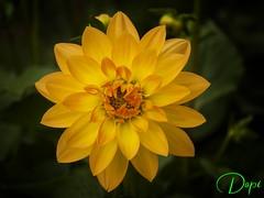 P2205713 (dopior) Tags: 2010 flores
