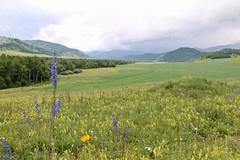 Tsar Kurgan, Sentelek river valley, Altai Krai, Siberia, Russia (susiefleckney) Tags: tsarkurgan sentelekrivervalley altaikrai siberia russia scythian kurgan barrow burialmound