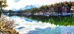 Herbert Lake, Banff National Park - ICE(5)2939-50 (photos by Bob V) Tags: banff banffpark banffnationalpark banffalberta banffalbertacanada mountains rockies rockymountains canadianrockies panorama mountainpanorama mountainlake lake herbertlake reflection reflectiononwater reflections placid