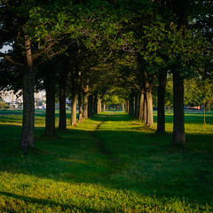 Alley (Shumilinus) Tags: 2013 35mmf18 landscape nikond300s park trees foliage grass light shadows pathway alley