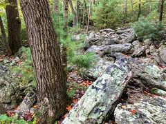 IMG_2924.jpg (Darren and Brad) Tags: hiking hawkmountainsanctuary hike hawkmountain appalachian riverofrockstrail pennsylvania
