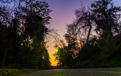 Camino Cerro San Cristóbal (wladimir.zuniga) Tags: puesta de sol hierba árbol cielo paisaje bosque anochecer carretera camino parque