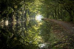 MVC_9664 (maurovinco) Tags: uk yorkshire calderdale canal canale water acqua path riflesso reflextion tree alberi nikon morning mattino d750