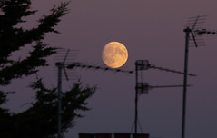 Waxing Gibbous Moon 22 Oct 2018 (Sculptor Lil) Tags: moonrise moon london canon700d waxinggibbous dusk