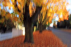 Late Afternoon (Bad Kicker) Tags: impressionism fall autumn leaves trees abstract icm intentionalcameramovement