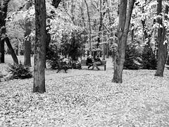 Botanical Garden of Professor I. S. Kosenko (uiriidolgalev) Tags: botanical garden professor i s kosenko