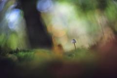 Don't rush it (Joe Effendi (Always Late!)) Tags: effendi fujix xt10 projectorlens projectionlens hugomeyercogörlitzkinoniii5cm mushroom fungi paddestoel nature natuur outdoor flora dof depthoffield bokeh closeup macro september 2018