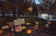Mesmeric Cove Pumpkin Patch (Gaea Oakleaf-Danick) Tags: pumpkin scarecrow field autumn harvest fall season halloween mesh sl mesmericcove