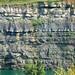 Pottsville Group (Pennsylvanian; Dupler Pit, East Fultonham, Muskingum County, Ohio, USA) 5