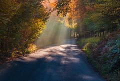 Burrator beams (snowyturner) Tags: burrator mist morning beams autumn leaves road trees foliage nature reservoir dartmoor