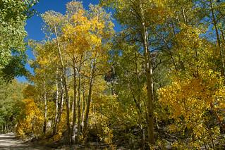 Fall on North Lake Rd  8725