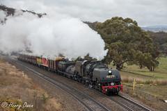 At The Top (Henry's Railway Gallery) Tags: 6029 ad60class garratt steamlocomotive steamtrain heritagetrain thnsw transportheritagensw passengertrain 6s70 cullerin