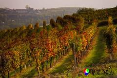 Monferrato (AL) (Gianni Armano) Tags: monferrato alessandria photo gianni armano foto flickr