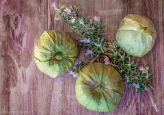 Tomatillos and Lavender (Maureen Medina) Tags: maureenmedina artizenimages food stilllife tomatillos green tomato husk lavender sprig herb flower purple texture