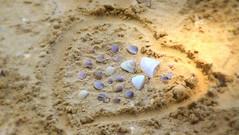 Beach time (Rekha Prasad) Tags: beach sea shells seashells sand beachphotos shellonthebeach nature nikon d3300 aonang krabi thailand krabibeaches