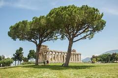 Athena temple Paestum (AndyM23) Tags: paestum temple greek italy