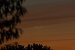 Small Crescent Moon / @ 300 mm / 2018-10-08 (astrofreak81) Tags: smallcrescentmoon small crescentmoon moon luna mond planet stars boat tree light night sky dark konjunktion konstellation dresden 20181008 sylviomüller sylvio müller astrofreak81