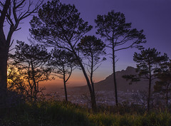 A Colorful Dawn (Arranion) Tags: dusk dawn sunrise nature trees tree mountain tablemountain africa southafrica capetown city morning color canon