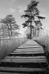 Frosty (endresárvári) Tags: winter sweden frsty bridge pine cold reeds bw monochrome lake landscape nature