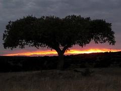 eiche im sonnenuntergang (lualba) Tags: steineiche sonnenuntergang sundown oak alentejo monsaraz portugal landscape landschaft