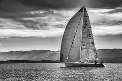 Voilier (Didier Mouchet) Tags: bateau voilier mer landscape lacléman lakeofgeneva lac littoral léman landschaft nikond5300 nikon noiretblanc nuages navigation blackandwhite bw bianconero didiermouchet d5300