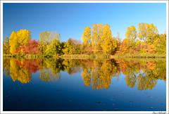 Reflection (schmilar77) Tags: herbst gewässer landschaft jahreszeit see spiegelung bildbeschreibung wald natur stausee leinefeldeworbis thüringen deutschland