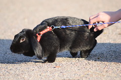DSC_0316 (klawerjanina) Tags: bunnyjump bunny kani kaniestekisat kanin kaninhoppning