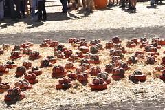 DSC_2538 (earthdog) Tags: 2018 needstags needstitle nikon d5600 nikond5600 18300mmf3563 fall autumn pumpkinpatch spinafarms farm