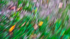 tree leaves trail (peter manintveld) Tags: bladeren leaves herfst autumn trail movement kleuren colours