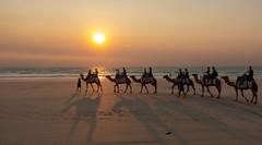 10003432.jpg (KevinAirs) Tags: camels kevinairs ocean camel travel westernaustralia ©kevinairswwwkaozcomau sand sky landscape landscapes beach australia sea