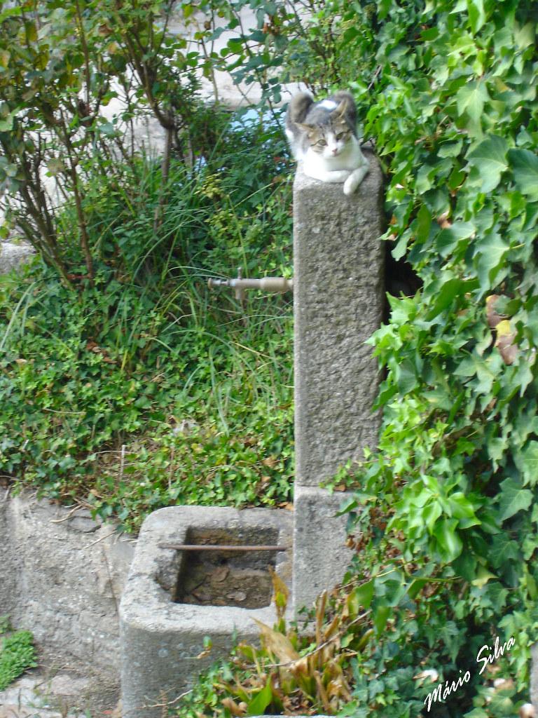 Águas Frias (Chaves) - ... o gato descansando sob os raios de sol outonal em cima do fontanário ...