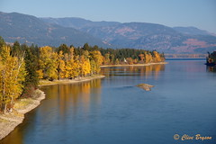 Little River between Little Shuswap Lake & Shuswap Lake, BC (clive_bryson) Tags: littleriver shuswap britishcolumbia canada fall autumn water trees clivebryson 169