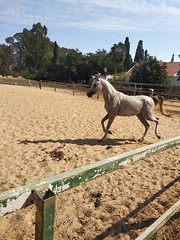 9 (redi3103) Tags: egyptian arabian horse for sale buy champion