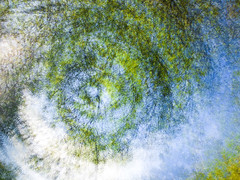 Looking up! (judy dean) Tags: judydean 2018 avgcampro multipleexposure sky trees