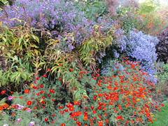 Autumn perennials (wallygrom) Tags: england westsussex haywardsheath handcross nymans nymansgarden nt nationaltrust