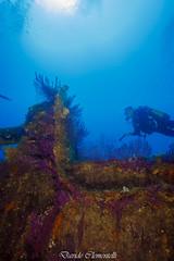 IMG_1414 (davide.clementelli) Tags: diving dive dives padi immersione immersioni ampportofino portofino liguria friends amici underwater underwaterlife sottacqua