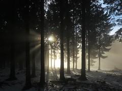 Am Feldberg im Taunus (nordelch61) Tags: deutschland heimat hessen taunus mittelgebirge wald baum bäume ast äste zweig zweige nebel sonne gegenlicht sonnenstrahlen sun sunbeams