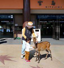 Japan: Miyajima welcome deer (Henk Binnendijk) Tags: miyajimaisland hatsukaichi hiroshima japan itsukushimashrine deer hert ree ferryterminal people animal insel île eiland island