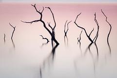 Twisted Colliford (Timothy Gilbert) Tags: lovecornwall water lake silhouette bodminmoor collifordlake sunrise m43 microfourthirds lumix microfournerds panasonic45150mmf4056 sticks cornwall panasonic gx8